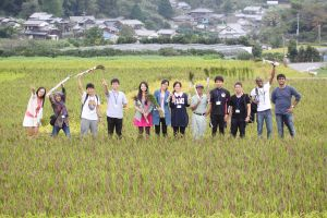Rice Field In Itoshima